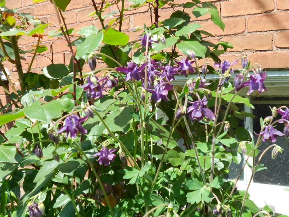 Violets. Michigan, May 2012.